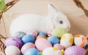 Wallpaper Easter, Rabbit, Holiday, Eggs