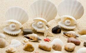Picture sand, sea, beach, shore, shell, summer, beach, sea, blue, sand, shore, paradise, starfish, seashells