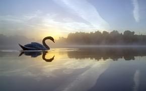 Wallpaper fog, lake, reflection, bird, England, morning, Swan, England, Crime Lake, Lake Of Krim, Failsworth, Failsworth, ...