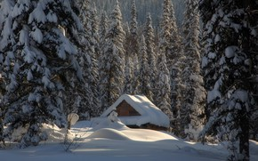 Picture winter, forest, snow, hut, ate, the snow, hut, Russia