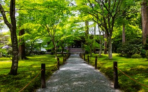 Picture greens, grass, trees, Park, Japan, the fence, track, Kyoto, the bushes, Ohara
