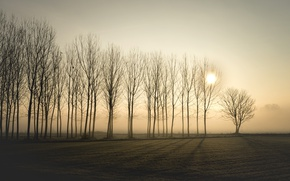 Picture trees, sunset, fog
