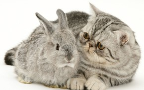Picture kitty, rabbit, grey