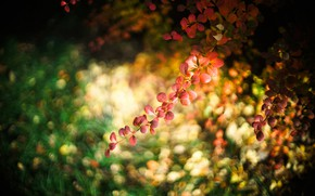 Picture sprig, background, leaves