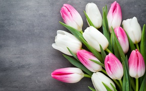 Wallpaper beautiful, pink, fresh, pink, tulips, white, white, tulips, bouquet, spring, flowers, flowers