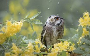 Picture leaves, drops, flowers, branches, nature, owl, bird, birds of the world