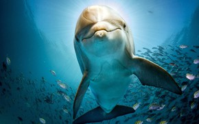 Picture fish, sea, water, Dolphin, under water, blue