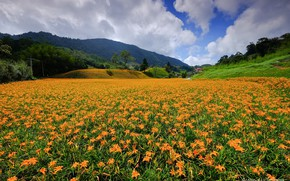 Picture summer, landscape, flowers, mountains, nature, Lily, flowering