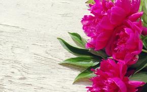 Wallpaper beautiful, pink, wood, peonies, pink, flowers, peony