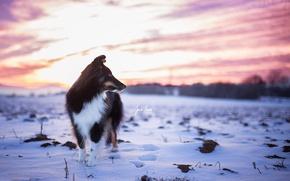 Wallpaper winter, sunset, dog