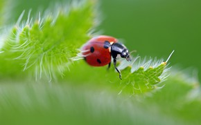Picture summer, macro, insects, nature, ladybug, beauty, plants, petals, bugs, cottage, flora, July