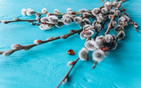Picture spring, Bouquet, buds, spring, twigs, ribbon, Bouquet, willow, buds, Verba, twigs