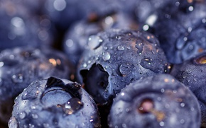 Picture drops, blueberries, bokeh, macro, berries