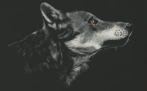 Picture face, wolf, profile