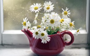 Picture chamomile, kettle, window