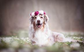Picture flowers, nature, dog, wreath