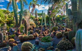 Picture greens, the sky, the sun, clouds, trees, flowers, garden, Italy, cacti, the bushes, Ischia island