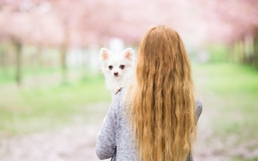 Picture girl, each, dog