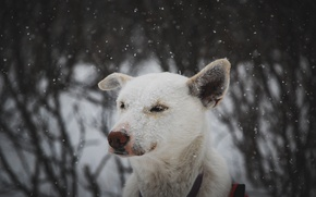 Picture each, dog, snowfall