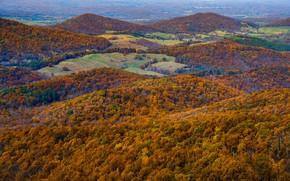 Picture autumn, landscape, panorama