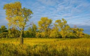 Picture field, landscape, nature, beauty