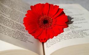 Picture Flower, Book, Gerbera