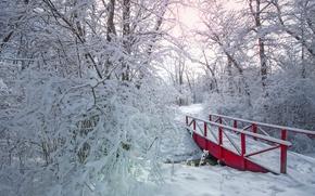 Picture winter, snow, trees, Park, the bridge