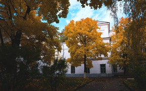 Picture autumn, trees, yellow