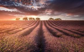 Picture field, light, lavender