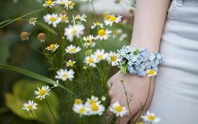 Picture chamomile, Spring, Flowers, Bracelet, Flowers, Spring, forget-me-nots, Bracelet