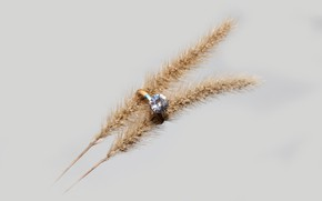 Picture background, spikelets, ring, diamond