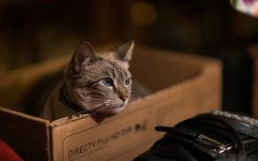 Picture cat, cat, box, muzzle