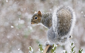Picture snow, protein, tail