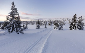 Picture winter, snow, trees, Norway, Norway, Lillehammer