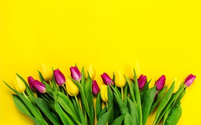 Picture flowers, bouquet, yellow, colorful, tulips, fresh, yellow, flowers, tulips, spring, purple