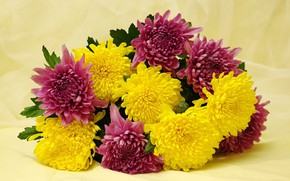 Picture flowers, holiday, beauty, bouquet, chrysanthemum