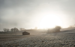 Picture field, fog, house, morning