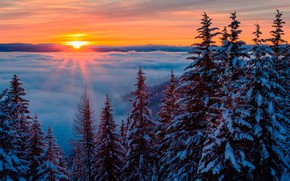 Picture winter, forest, the sky, the sun, clouds, snow, trees, fog, dawn