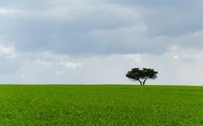 Picture grass, landscape, tree, Field