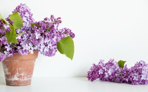 Picture flowers, bouquet, pot, lilac