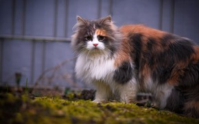 Picture cat, grass, cat, look, kitty, the fence, spring, yard, kitty, face, cutie, fluffy, spotted, trehlistna