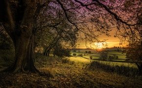 Picture sunset, nature, tree