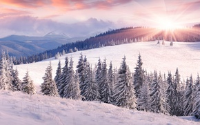 Picture winter, field, forest, the sky, the sun, clouds, rays, snow, landscape, mountains, hills, view, ate, …