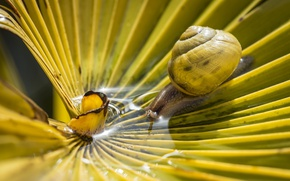 Picture flower, water, snail