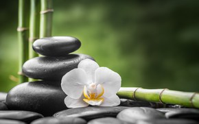 Picture flower, stones, bamboo, Orchid