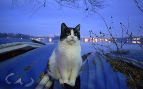 Picture cat, background, sitting, Kota