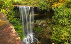 Picture forest, nature, waterfall
