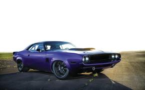 Picture Dodge, Challenger, Purple, 1970, Custom, Race Muscle Car