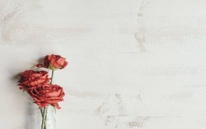 Picture flowers, background, bouquet, Roses
