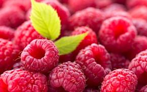 Wallpaper berry, leaf, raspberry